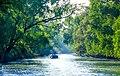 Beauty of Sundarban river.jpg