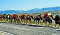 Becken von Mut 20 05 1997 Dromedar-Karawane von Yürüken-Nomaden auf dem Weg zur Yayla.jpg