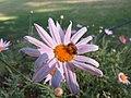 Bee Halictidae 6109.jpg
