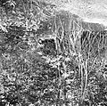 Begroeiing in Nickerie, Bestanddeelnr 252-5515.jpg