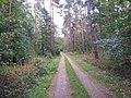 Bellheimer Wald - geo.hlipp.de - 27623.jpg