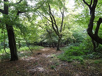 Bentley Priory - Heriot Wood, in the grounds of the Priory, probably dates back to the end of last Ice Age