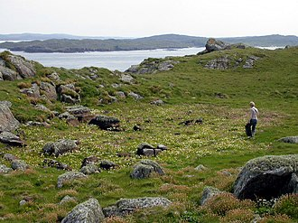 Bearasaigh - The flat top of Bearasaigh. The visible depression is believed to have been an artificial loch created by MacLeod's men to collect fresh water.