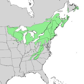 Betula alleghaniensis - Image: Betula alleghaniensis range map 1