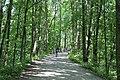 Bike path - panoramio (1).jpg