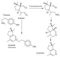 Biosíntesis de actinidina.png