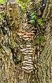 Biotoop op de stam van een knotwilg. (d.j.b) 01.jpg