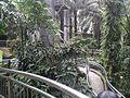Bird Park in Kuala Lumpur (Malaysia) (23).jpg