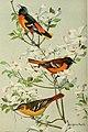 Bird lore (1922) (14747962941).jpg