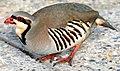 Birdpak3.jpg