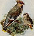 Birds of Britain (1907) (14753049884).jpg