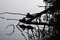 Birds silhouette (3523538262).jpg