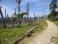 Black Elk Peak hike 10.jpg