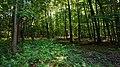 Blick auf einen Teil des Waldes, der den Beversee umgibt.jpg