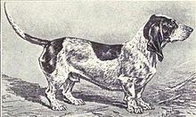 """A black and white drawing of a Basset type dog which is mostly white with dark patches. The dog is in profile, facing right"""
