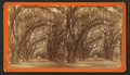 Bonaventure Cemetery near Savannah, from Robert N. Dennis collection of stereoscopic views 2.png