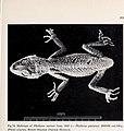 Bonner zoologische Monographien (1990) (19770537174).jpg