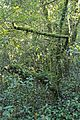 Bosque - Bertamirans - Rio Sar - 002.JPG