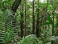 Bosques Nublados de hermosa diversidad vegetal.jpg