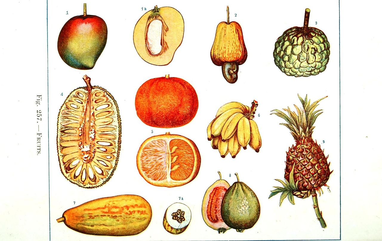 File Botanical Educational Plate Fruits Jpg Wikimedia Commons