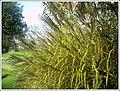 Botanischer Garten Freiburg - Botany Photography - panoramio (25).jpg