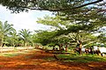 Boulevard du village Ndanga.jpg