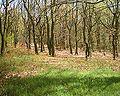Bowden Housteads Woods 02-05-06.jpg