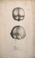 Brain; two figures, including one showing the brainstem and Wellcome V0008196ER.jpg