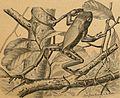 Brehms Tierleben - allgemeine Kunde des Tierreichs (1911-1921) (19790486684).jpg