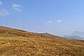 Brezovica Mountain 03.jpg