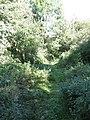 Bridleway Through Haws Hill Wood - geograph.org.uk - 1480108.jpg