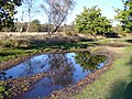 Bridleway by Hankley Cottage - geograph.org.uk - 272561.jpg