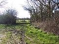 Bridleway near Summerleaze Farm, Kinghay - geograph.org.uk - 359410.jpg