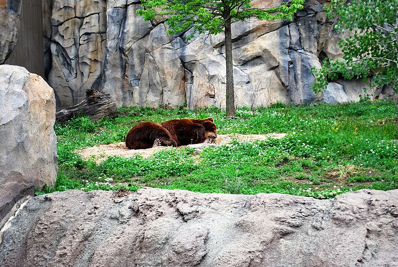 File:Brown bear 0108.JPG