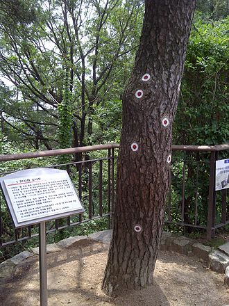 Blue House raid - Image: Bukaksan pine tree with bulletholes marked