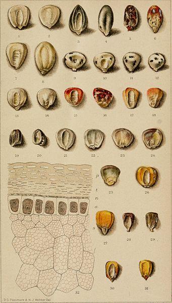 File:Bulletin (1896-1901) (20233125620).jpg