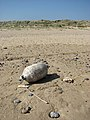 Buoy on the foreshore - geograph.org.uk - 802669.jpg