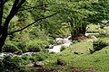 Burimi i ftohtë i Lumit të Prevallës.jpg