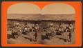 Burros packed with wool, from Robert N. Dennis collection of stereoscopic views.png