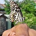 Butterfly321.jpg