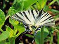 Butterfly 3150.jpg
