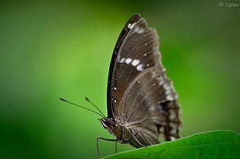 Butterfly bokeh2.jpg