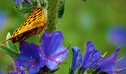 Butterfly in Elatia forest - 3.jpg