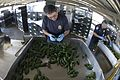 CBP Agriculture Specialist Conducts Pepper Inspections at an El Paso Port of Entry (20841287902).jpg