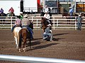 CFD Tie-down roping Matt Peters -1.jpg
