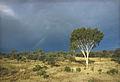 CSIRO ScienceImage 1811 Central Australian Landscape.jpg