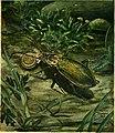 Caccia grossa fra le erbe (1942) (20325237669).jpg