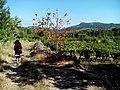 Camino Torres. Etapa 10. Sernancelhe - Moimenta da Beira (9592981542).jpg