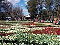 Canberra 2015.jpg