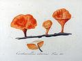 Cantharellus cibarius — Flora Batava — Volume v9.jpg